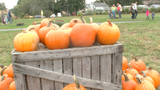 Pick Your Own Pumpkin event at Flinchbaugh's Orchard & Farm Market with different activities to participate in.
