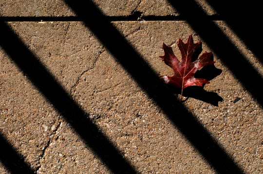 A fallen leaf rests momentarily between long shadows cast across a sidewalk next to the T&P Warehouse at Pine and N.1st streets.