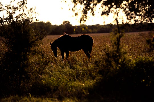 A horse is lit by the sinking sun as he grazes in a pasture in southern Taylor County Monday. Autumn's light is a challenge to capture, but the rewards are worth it.