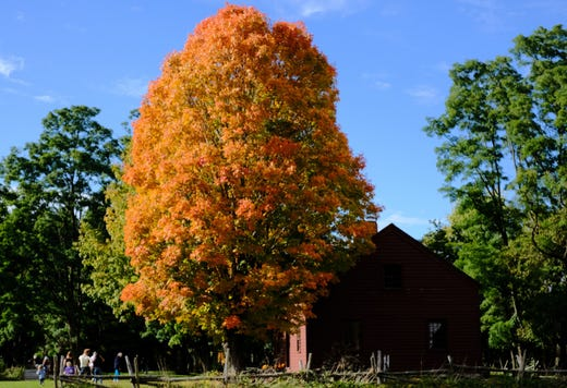 Vermont foliage at peak: A collection of some of the best photos