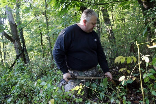 Marv Kraus, a licensed harvester and dealer, digs wild ginseng on private property in Clayton County on Monday, Sept. 23, 2019. Ginseng can only be harvested in September and October on private land with permission of the landowner by licensed harvesters.