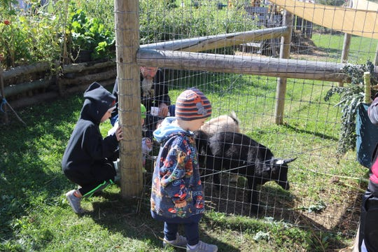 The Harrington family, of Fremont, had the opportunity to hand feed some young animals various leafy greens and corn, which appeared to be a favorite among the goats.