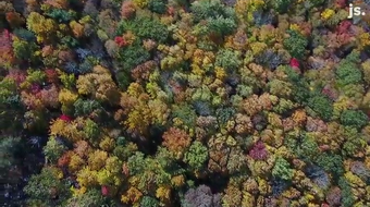 Here's what fall colors at Rib Mountain State Park looked like from a drone on Oct. 9, 2019.