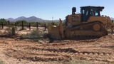 Conservation concerns arise after a saguaro is bulldozed in Organ Pipe Cactus National Monument to make room for a border wall.