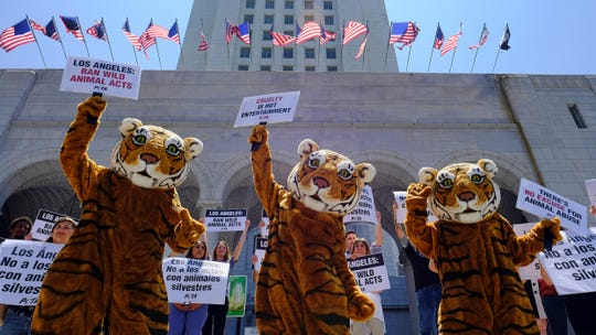 In this July 7, 2016, file photo, led by three costumed tigers, dozens of animal rights protesters with People for the Ethical Treatment of Animals gather at City Hall in Los Angeles to call on the city to prohibit using tigers, lions, and other wild animals in circuses.