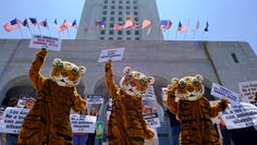 In this July 7, 2016, file photo, led by three costumed tigers, dozens of animal rights protesters with People for the Ethical Treatment of Animals (PETA) gather at City Hall in Los Angeles to call on the city to prohibit using tigers, lions, and other wild animals in circuses.