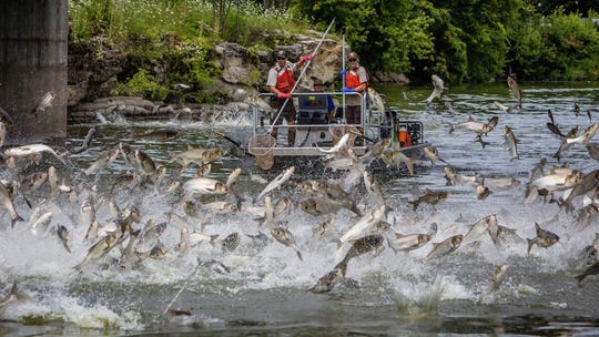 The U.S. Senate Appropriations Committee passed a budget that included $14 million to fight Asian Carp in Tennessee.