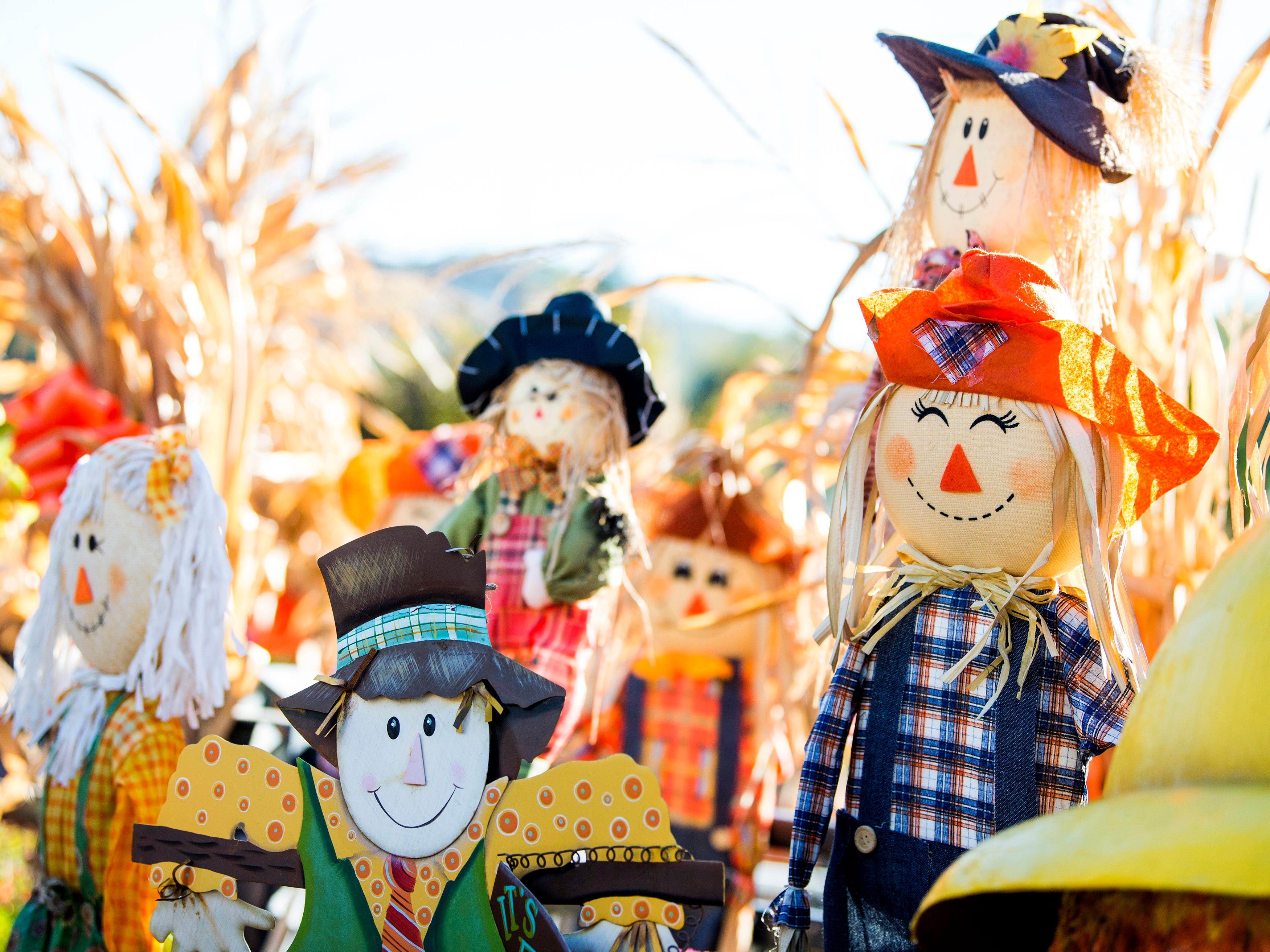 Gatlinburg tries to break world record with 4,325 scarecrows