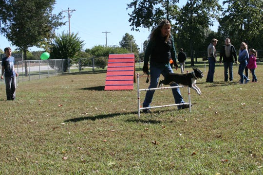 Amber Parpart of Yellville puts her nearly one-year-old dog Romeo through his paces Saturday at the Mountain Home Dog Park's new dog agility course. The park has two play areas, one for smaller dogs and a side for larger dogs -where the agility equipment is set up.