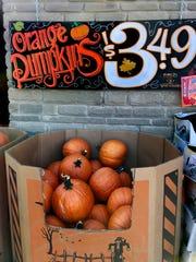 Shop around for pumpkin prices around Halloween.