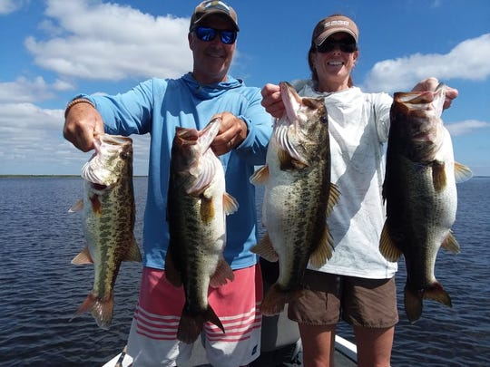 Bass fishing on Lake Okeechobee with Capt. Nate Shellen of Okeechobeebassfishing.com has been steady. Wild shiners fished around King's Bar and Point of the Reef work well.