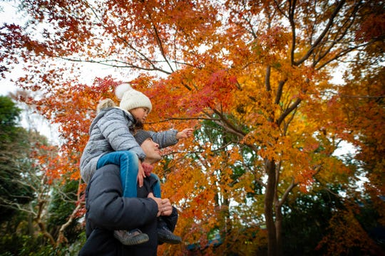 Father and daughter looking at autumn leaves