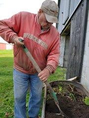 Bob busy digging up canna tubers.