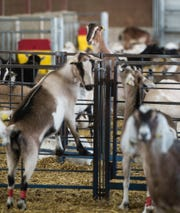 Milk Source, Chilton dairy, goat farm. Since May of 2016, the Chilton Dairy goat farm, owned by Milk Source LLC,  has been a major supplier of milk to LaClare Farms in northeast Fond du Lac County.
