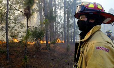 Firefighter reviews previous brush fire scene.