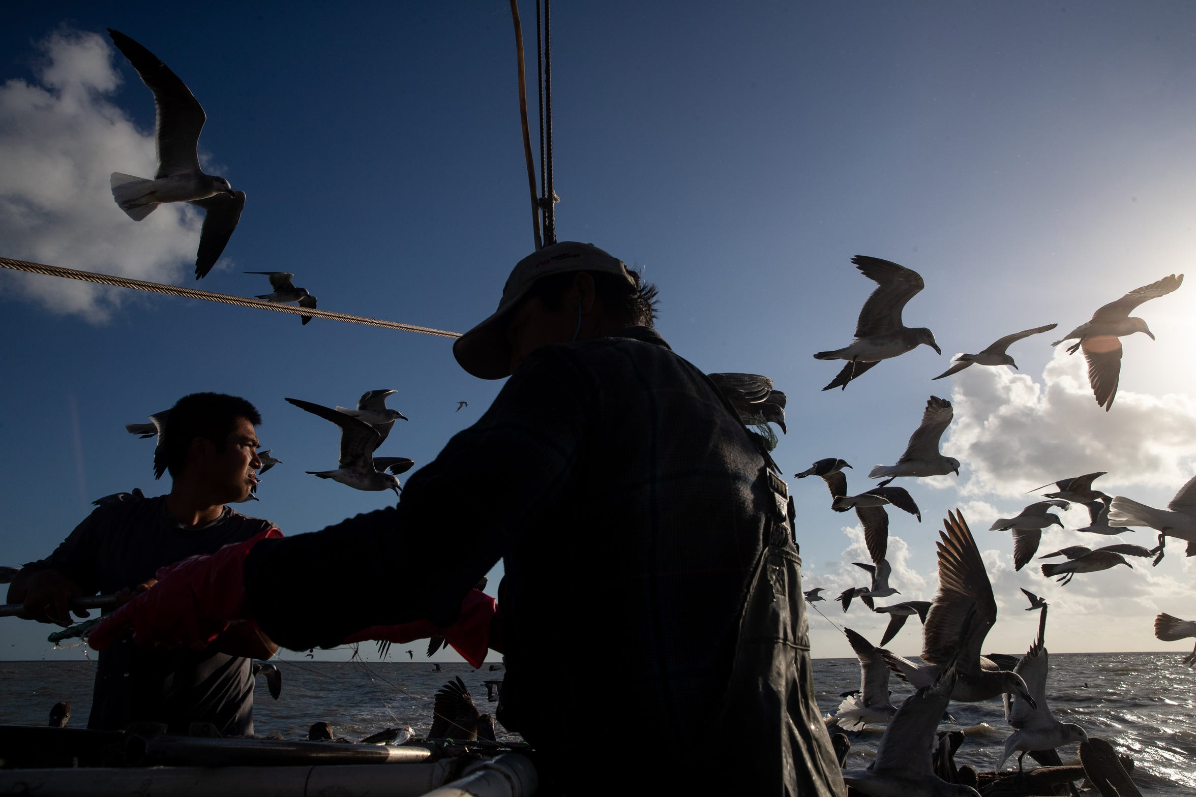 Birds surround Doan Pham and his son Tuan Pham as they separate their catch aboard his shrimping boat, Margie in Aransas Bay on Tuesday, Oct. 1, 2109.