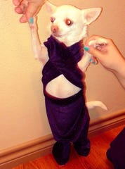 A San Antonio woman paid tribute to Selena Quintanilla by dressing her dog in a miniature version of the singer's iconic purple jumpsuit.
