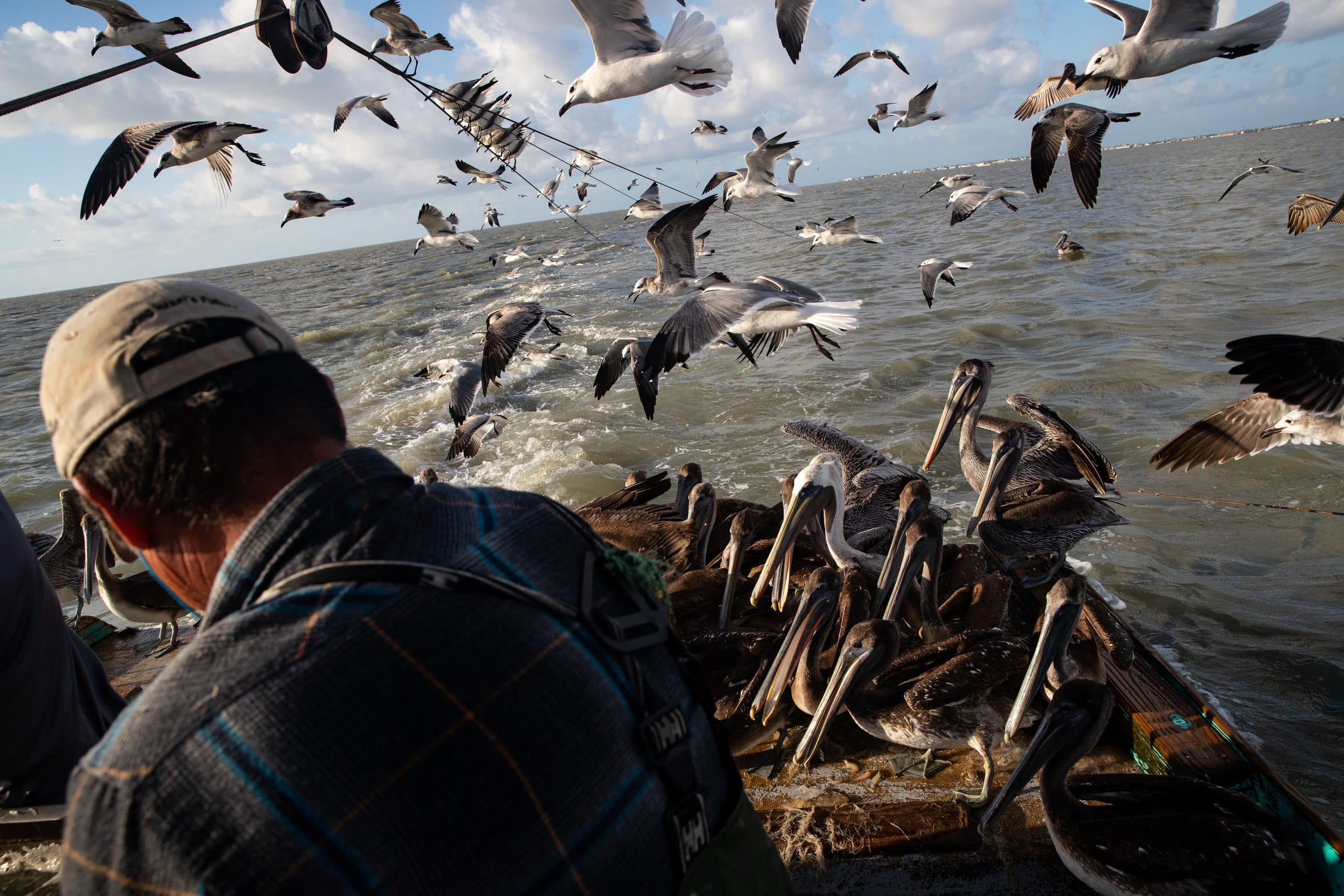 Birds follow and sit on the deck of Doan Pham's shrimping boat, Margie as he shorts what he caught in Aransas Bay on Tuesday, Oct. 1, 2109.