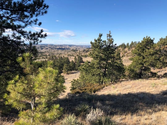 Sagebrush steppe and conifer woodlands are important habitats of the proposed Whiskey Ridge Conservation Easement