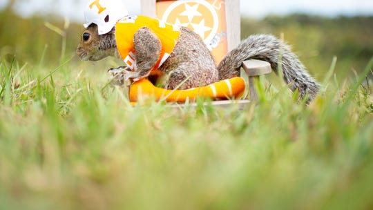 Meet the squirrel that went to a Tennessee football game — in a Vols uniform