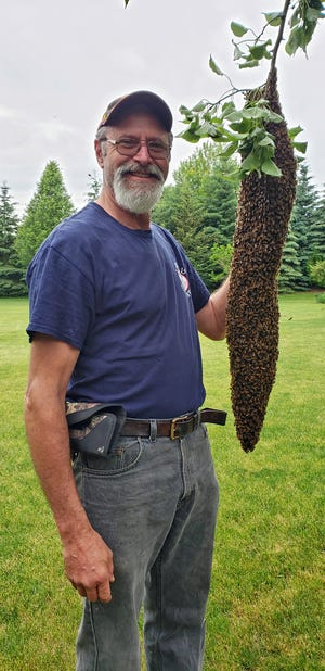 "Andy Hemken is shown here capturing a swarm of honeybees. Hives sometimes ""split,"" with half the hive looking for a new home. This one is in transit. He put it in a hive box and took it home."