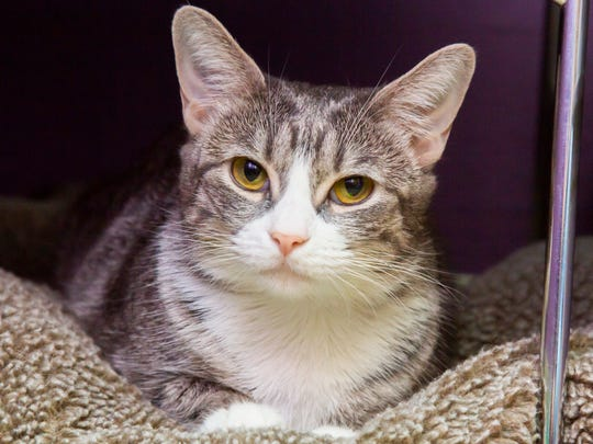 Stormy is available for adoption at the Arizona Humane Society's Campus for Compassion, 1521 W. Dobbins Road in Phoenix. For more information, call 602-997-7585 and ask for animal number 614075.