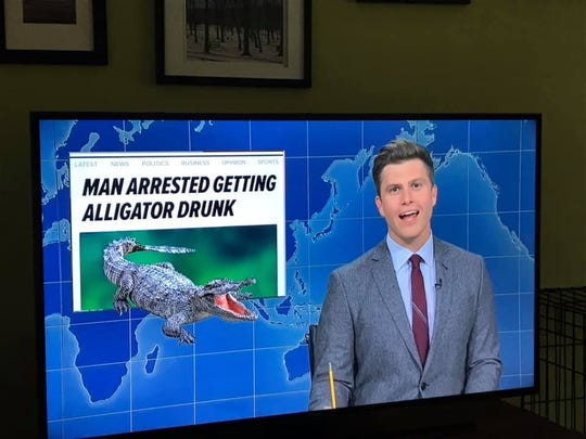 """""""Saturday Night Live"""" Weekend Update anchor Colin Jost talks Saturday about a story originally written by breaking news reporter Sara Marino and published on TCPalm."""