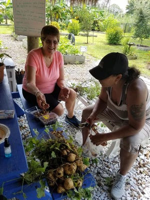 Martin County Master Gardener Patty Beonde gives assistance to a volunteer at the Indiantown Community Garden.