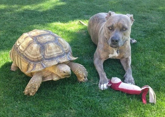 Mr. Mabel hangs out with another family pet, Capone.