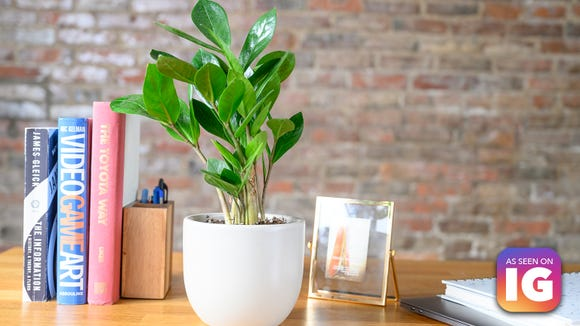 Add some green to your space this winter with The Sill.