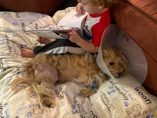 Tugger the dog is recovering from surgery after being shot in his own backyard on Monday.