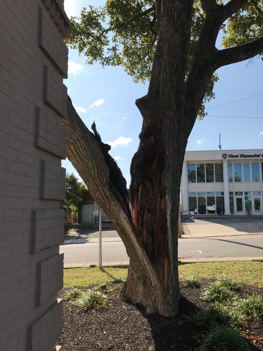 A large tree on Main Street split during a storm Tuesday night, Oct. 15, 2019, and part of it landed on the Clarksville-Montgomery County Regional Planning Commission building.