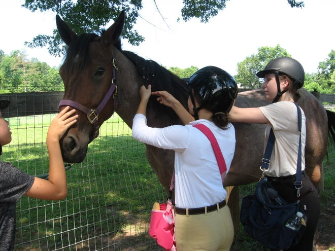 Horse Care Workshops will be held at Lord Stirling Stable, 256 South Maple Ave.in the Basking Ridge section of Bernards,beginning Saturday, Oct.26.