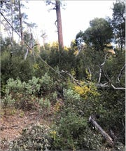 A Pacific Gas & Electric Co. photo shows a tree on top of a downed power line  somewhere in Shasta County the week of Oct. 7, 2019, when the utility giant rolled out power outages to prevent wildfires.