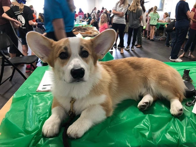 Murphy, owned by Leon County's 4-H Dog Club leader, Kassidy Lemmen, at the 4-H Open House.