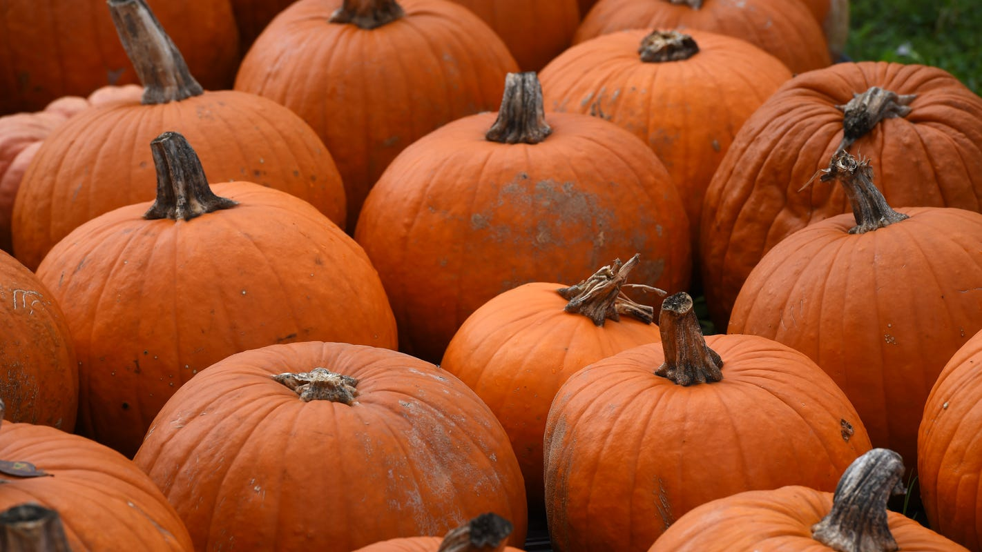 Eco-tip: Halloween's scary waste can be managed