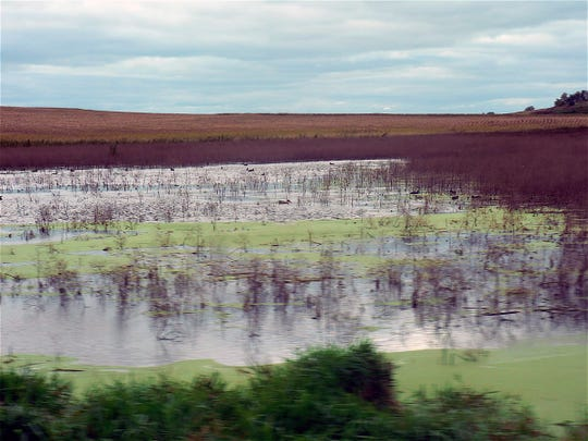 Water, Water in many farm fields. A challenge for many.