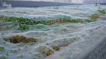 """Leo Anderson thought the spider web was frost when he first spotted it blanketing a field in Scotland. He said the phenomenon went on for """"hundreds of yards."""""""