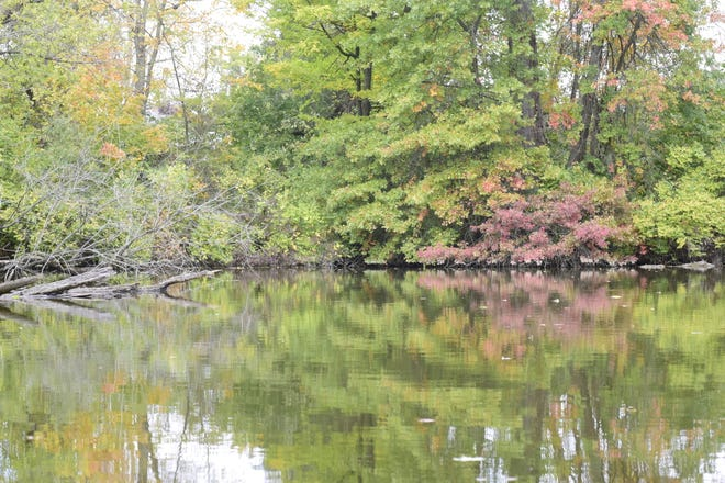 Several leaves float Thursday atop the pond at Cobey Park in Galion about a week before area leaves reach their peak color.