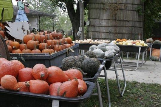 Pierce's Pumpkin Patch in Chariton.