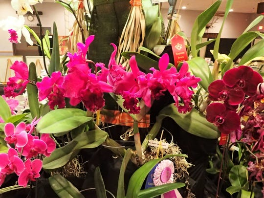 Orchids of many colors, fragrance and shapes will be on display at the Eastern Iowa Orchid Society's fall orchid show.