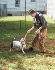Lawrence Durgasingh plays with a young female Staffordshire terrier in the exercise yard of the old Louisville Metro Animal Shelter on Manslick Road. Oct. 15, 2019