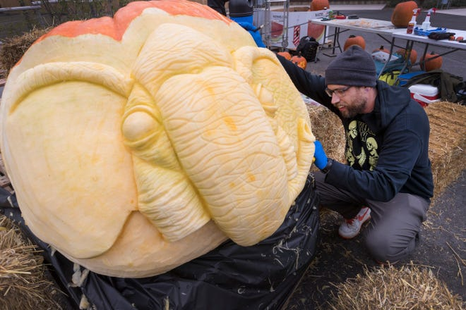 Food artist Titus Arensburg turns a 500-pound pumpkin into an elephant head Thursday at the Milwaukee County Zoo. The ornately carved pumpkins will be on display at the zoo's Boo at the Zoo weekend Friday and Saturday and Halloween Spooktacular, Oct. 25 and 26.