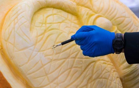 Food artist Titus Arensburg turns a 500-pound pumpkin into an elephant head Thursday at the Milwaukee County Zoo.