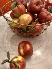 Apples of unknown origin grown and harvested in Mayhill, New Mexico.