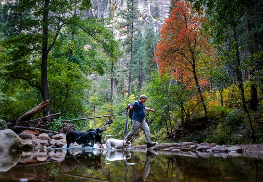 Kelly Janzen walks his three dogs, Sonny, Obie and Coco, form right to left, across Oak Creek on the West Fork trail in Oak Creek Canyon near Sedona on Oct. 14, 2019.