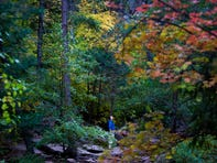 A man looks to the leaves and birds above on the West Fork trail in Oak Creek Canyon near Sedona on Oct. 14, 2019.