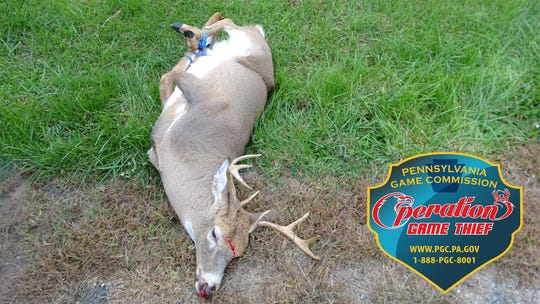 An investigation revealed the deer was shot in the head with a small caliber firearm and all four of its legs were bound.