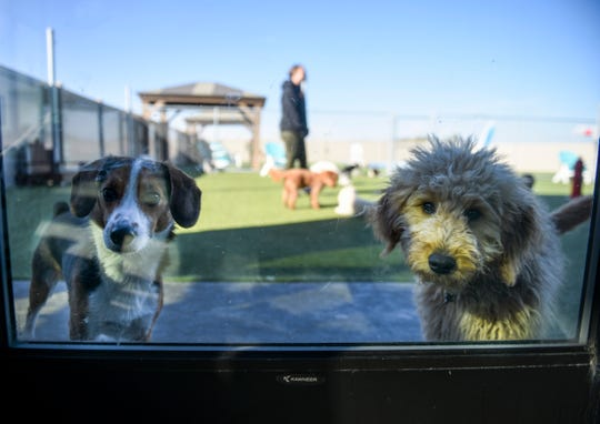 Dogs play during outdoor daycare time on Thursday, Oct. 17, 2019 at Paws Pet Resort.