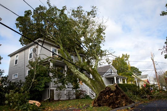 A house is trapped under a tree that toppled from strong winds on Oct. 17, 2019, in Danvers, Mass.